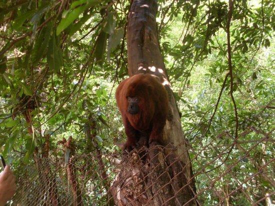 Biologa Tania Mara Netto Silva Ecological Park