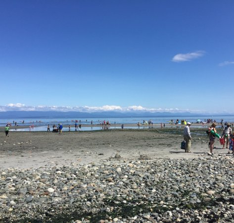 Courtenay, Canada: Tide is out and people are taking advantage!