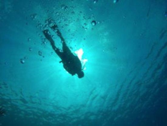 Paradise Dive Shop: mergulho