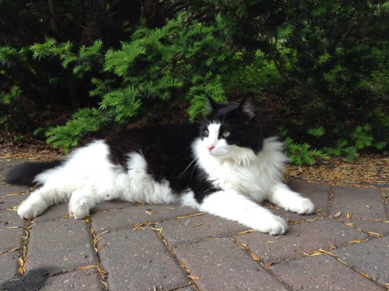 Amherst, MA: Panda the friendly cat :)