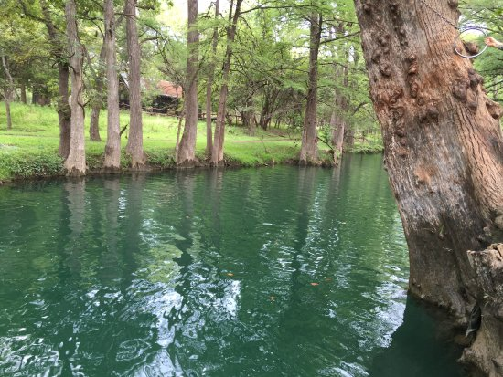 Wimberley, Техас: Cypress trees at the Blue Hole
