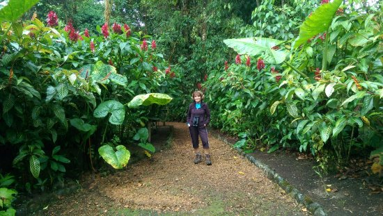 San Jorge de Milpe Eco-Lodge Orchid & Bird Reserve: Ginger