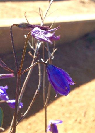 Lesmurdie, Australia: Wild Flowers in Spring