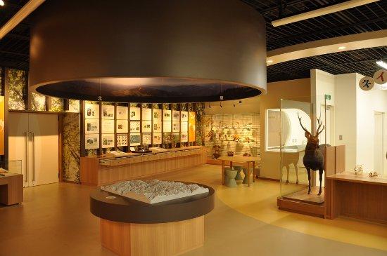 Wakasa-cho, Japão: 標本などで氷ノ山の自然を紹介しています。正面には大きなシカがお出迎え