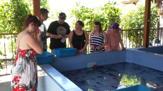 Kerobokan, Indonesia: Turtle conservation at serangan with mr Jason and family