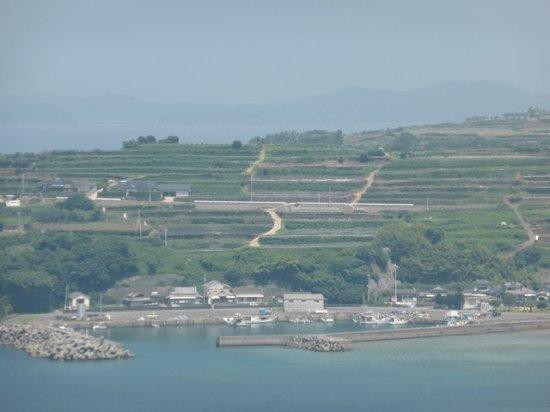 Agarihama Shiomi Terrace Field