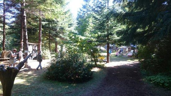 Kitty Coleman Woodland Gardens: DSC_1533_large.jpg