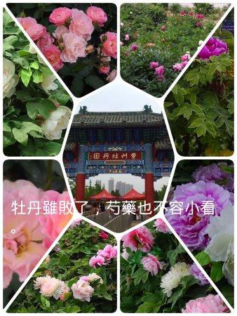 Cao County