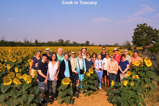 Montefollonico, Italia: Sunflowers with Cook in Tuscany