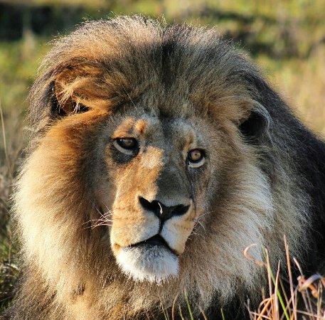 Sidbury, Sør-Afrika: IMG_20160915_133850_large.jpg