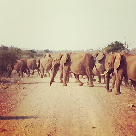 Madikwe Game Reserve, Sudáfrica: photo1.jpg