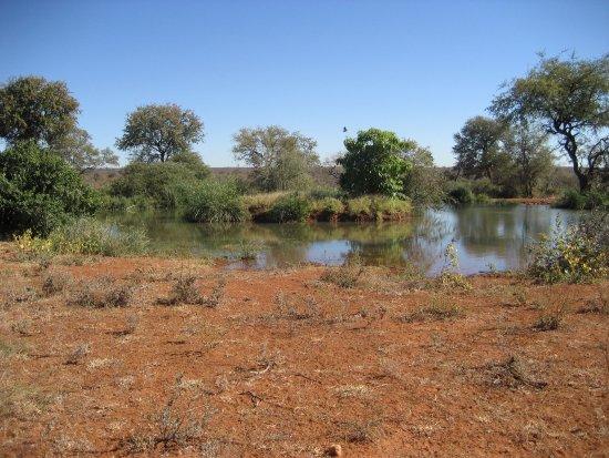 Balule Private Game Reserve, Sydafrika: i laghetti con i coccodrilli