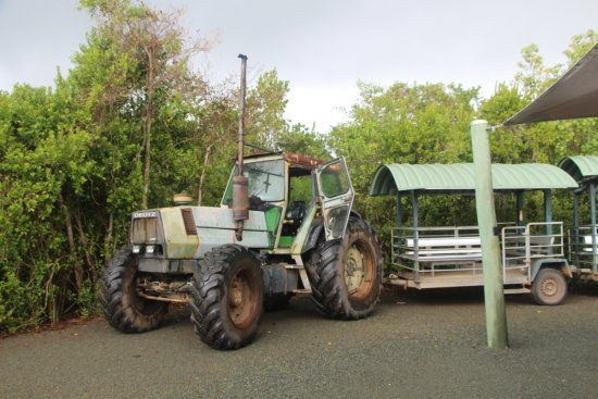 Whitsunday Crocodile Safari: Tractor tour train