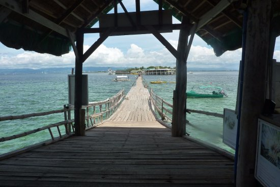 Cordova, Filipinas: Snorkeling and diving to the right side