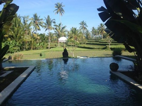Hati Padi Cottages: The pool with a splendid view on the rice fields
