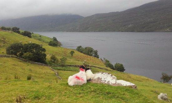 Sleepzone @ The Connemara Hostel : A sheep's eye view