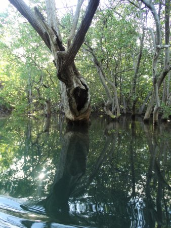 Playa Grande, كوستاريكا: Mangroves (Manglares)