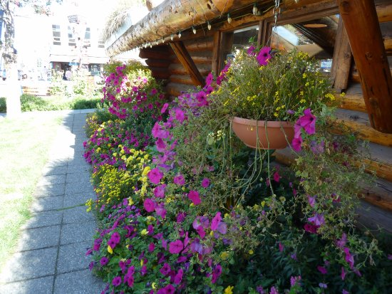 The Hotel Captain Cook: View of flowers at visitor center downtown from hotel