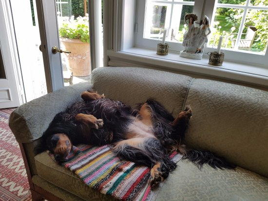 Aeroskobing, Dania: The adorable dog chilling in the living room
