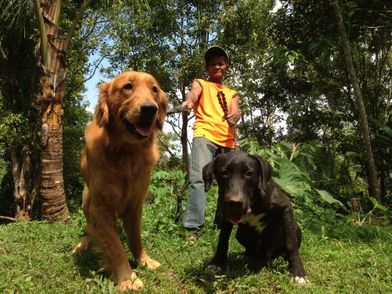 Tetebatu, อินโดนีเซีย: our guide dog, you can play and walk with them