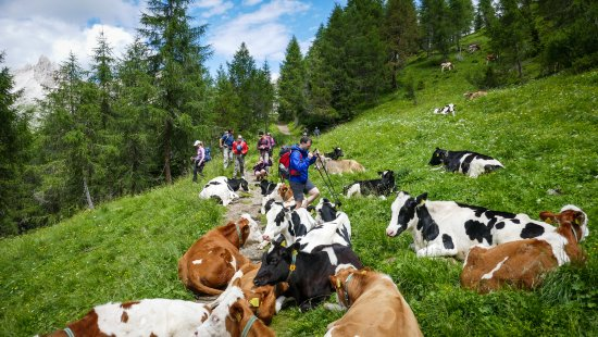 Holimites - Holiday into the Dolomites: Trekking through the Dolomites