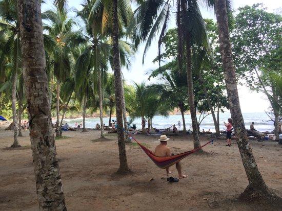 Ballena, Costa Rica: Lots of shady trees