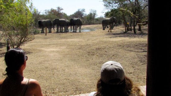 Monwana Game Lodge: We were also fortunate to have elephants come to the water hole next to the lodge