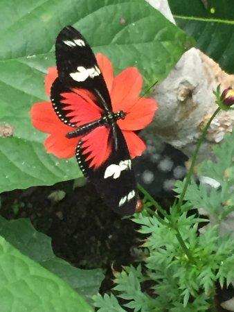 El Castillo, Costa Rica: One of many species
