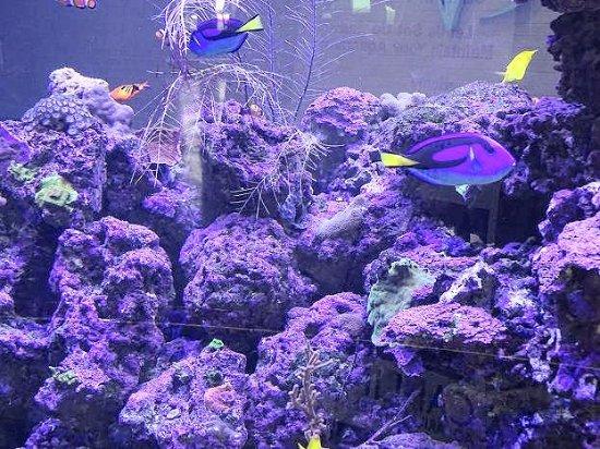 """Center in the Square: """"aquarium"""""""