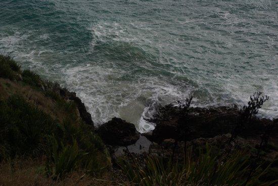 Nugget Point: des phoques se baignant dans la piscine