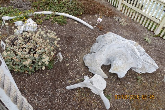 Pescadero, Californie : whale bones on the way to the lighthouse