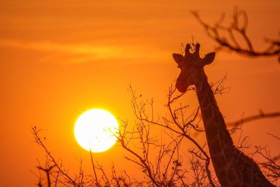 Частный заповедник Балуле, Южная Африка: activities