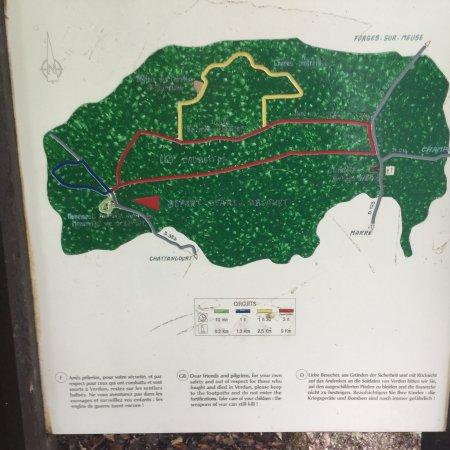 Woodland trails on Mort-Homme ridge
