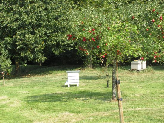Burwash, UK: Beehives at Batemans