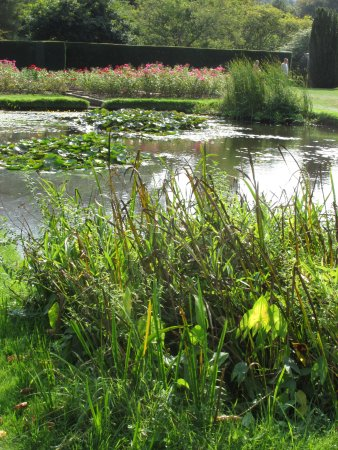 Burwash, UK: Pond at Batemans