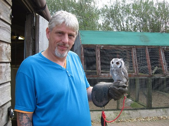 Woodhurst, UK: Goliath the Scops Owl