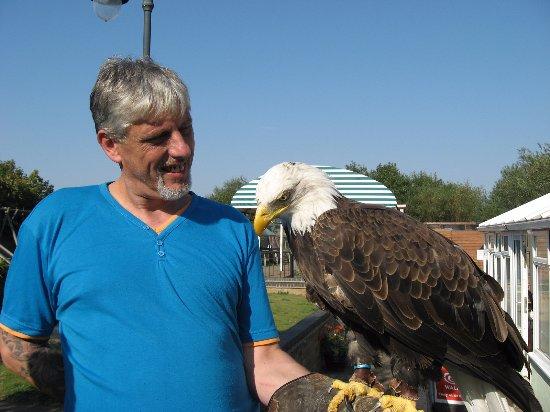 Woodhurst, UK: Dollar the Bald Eagle