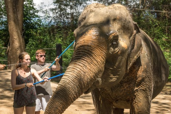 Tha Yang, Tayland: Meeting a rescue elephant