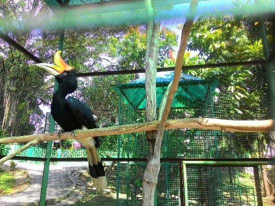 Wildlife Cultural Park Kinantan