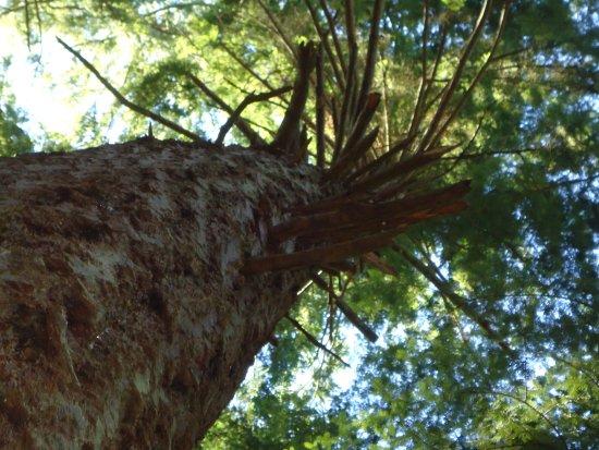 Kitsap Memorial State Park: I love the trees surrounding the cabin!