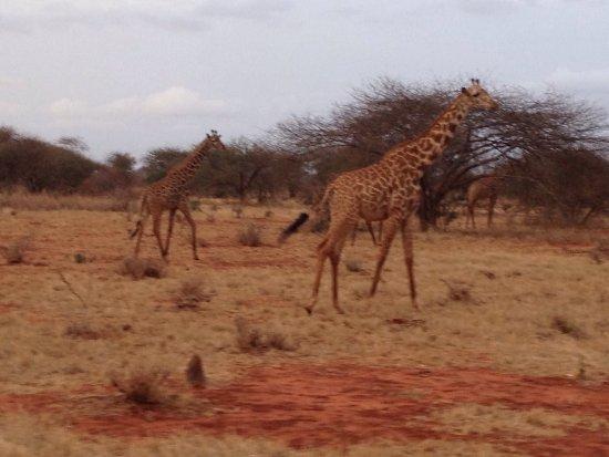 Voi, Kenia: photo7.jpg