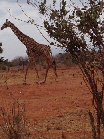 Voi, Kenia: photo8.jpg