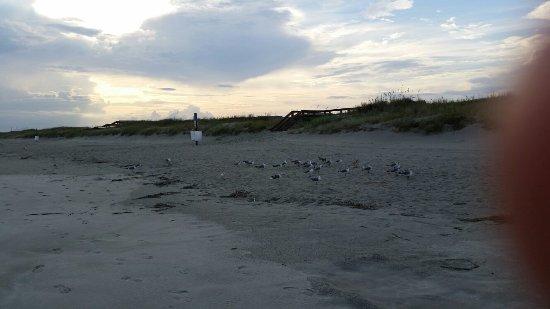 Ocean Isle Beach, NC: 20160828_184254_large.jpg