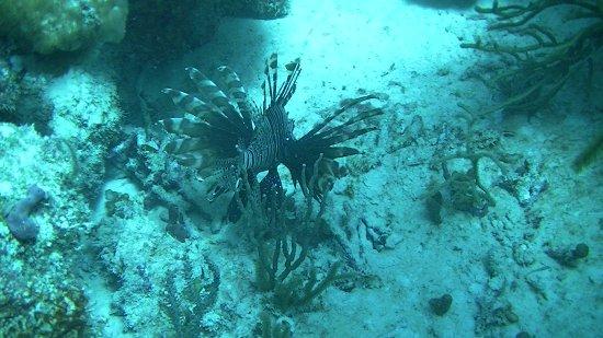 Casa del Mar Scuba Diving: Lion Fish