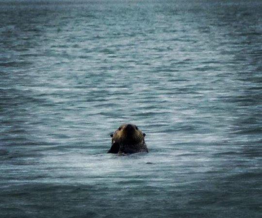 Gustavus, AK: Sea Otter