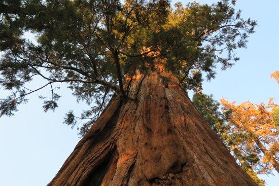 Three Rivers, كاليفورنيا: looking up