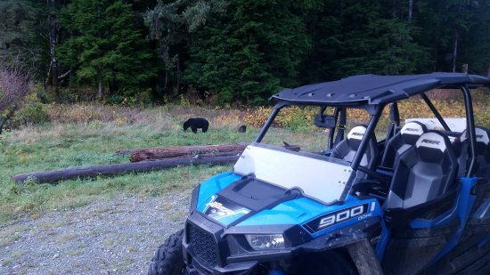 Port Alberni, Kanada: Bear watching experience!