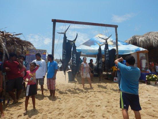 Playa San Augustin: Salifish competition, Playa San Agustin