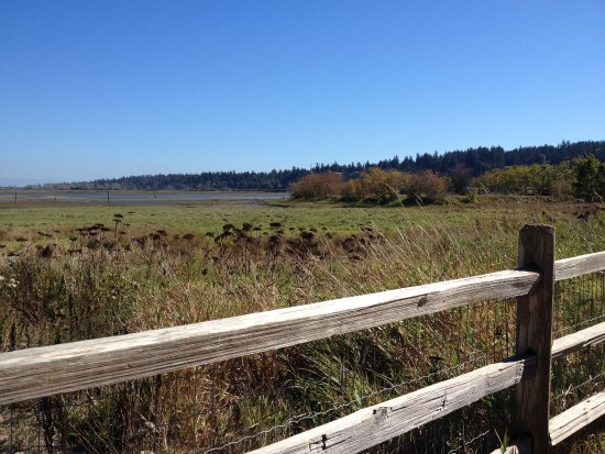 Surrey, Canada: One of the great views of the protected saltwater mash.