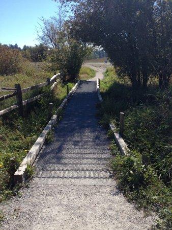 Surrey, Canada: A small seasonal bridge on one of the paths.